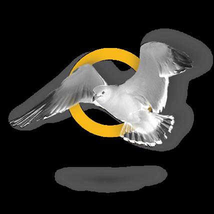 66-bird1