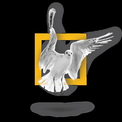 66-bird3
